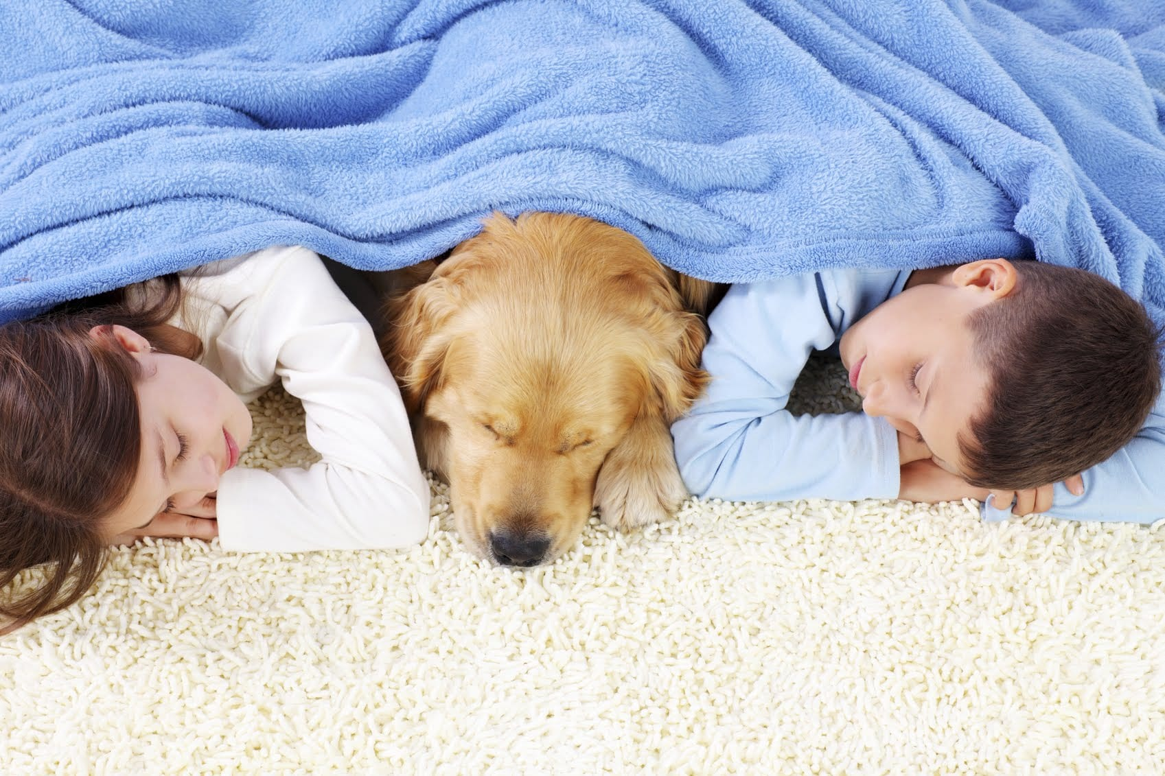 Tips to Pet-Proof Carpet